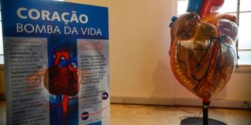 Rio de Janeiro - Exposição Vias do Coração no Museu da Vida, no Castelo da Fiocruz,  divulga o conhecimento sobre o coração, para estimular a prevenção das doenças cardiovasculares (Tomaz Silva/Agência Brasil)