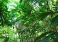 Dia Mundial do Meio Ambiente é comemorado em 5 de junho  Fonte: Agência Câmara de Notícias